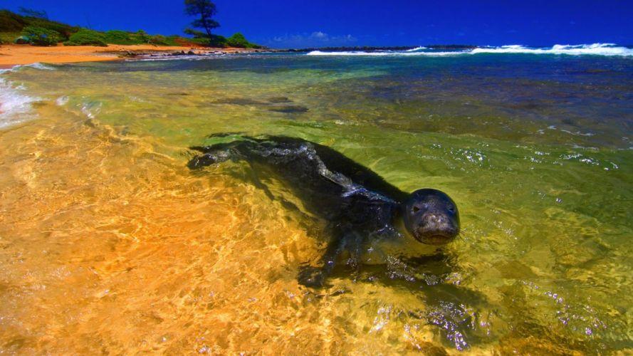 animal cute summer beauty beautiful sea nature ocean beach wallpaper