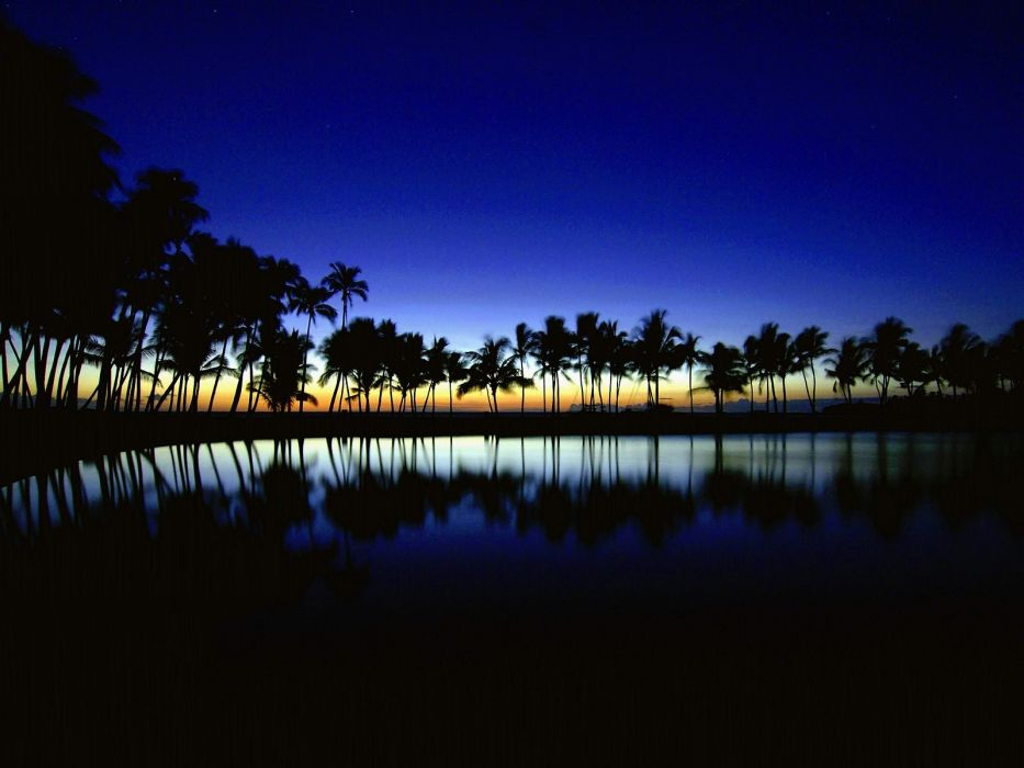 sunset summer beauty beautiful sea tree nature landscape ocean wallpaper