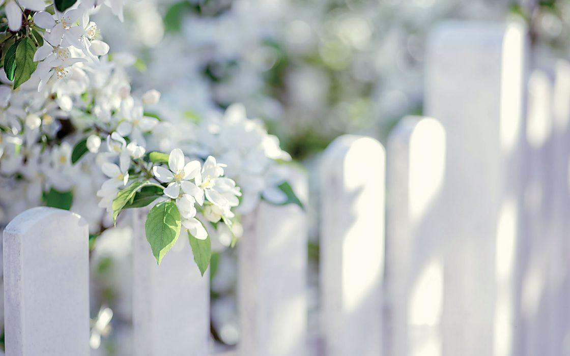 flower white summer beauty beautiful tree nature wallpaper