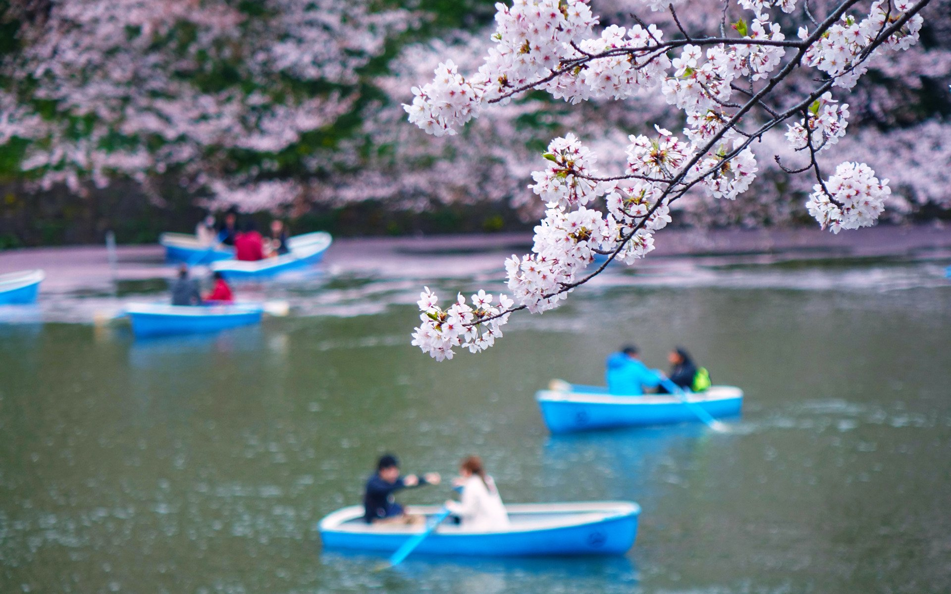 Flower River Peoples Couple Love Romantic Sakura Beauty Beautiful Tree Nature Landscape Wallpaper 1920x1200 801060 Wallpaperup