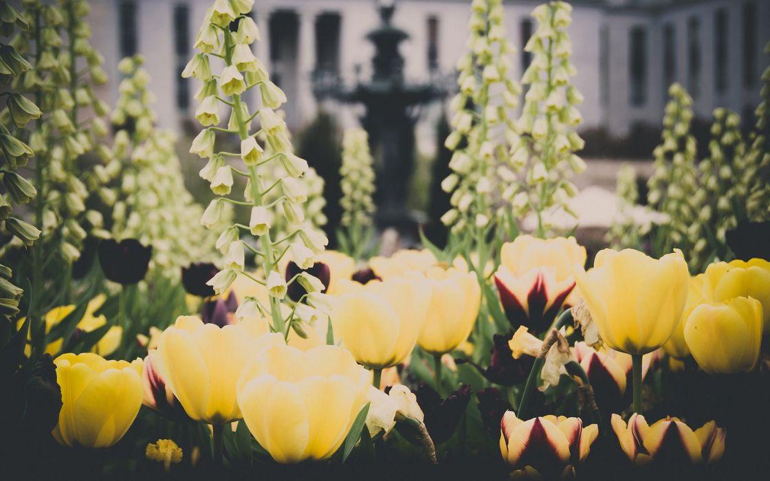 garden flower summer beauty beautiful nature landscape wallpaper