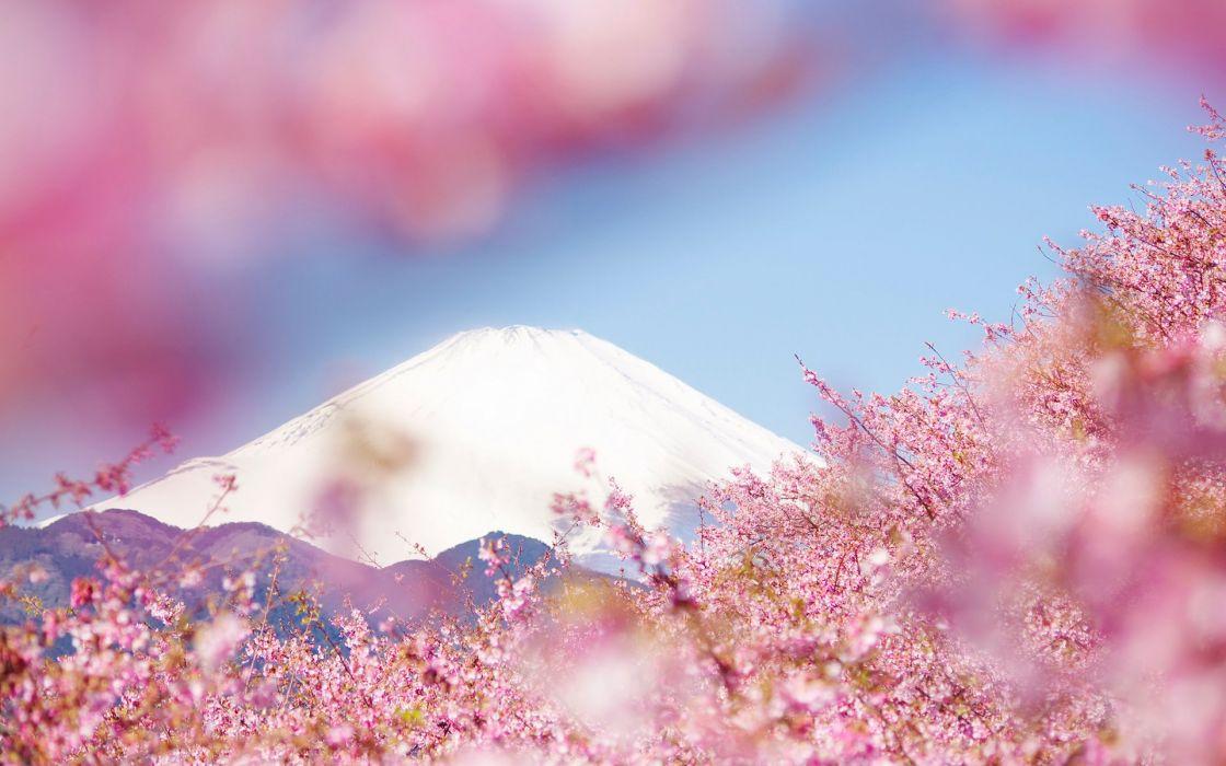 sky sakura beauty beautiful tree nature landscape mountain wallpaper