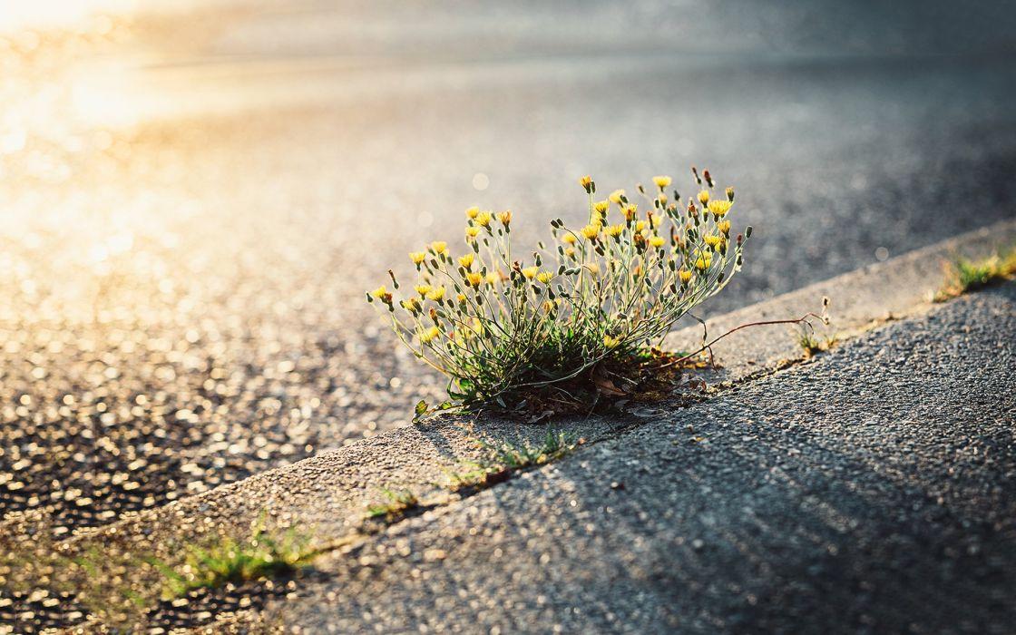 sidewalk flower beautiful beauty nature wallpaper