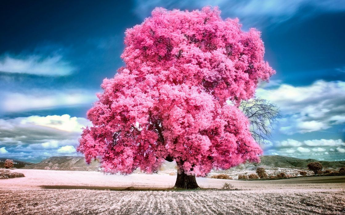 sky clouds pink summer beauty beautiful tree nature landscape wallpaper