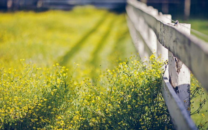 sunshine garden grass summer beauty beautiful tree nature landscape wallpaper