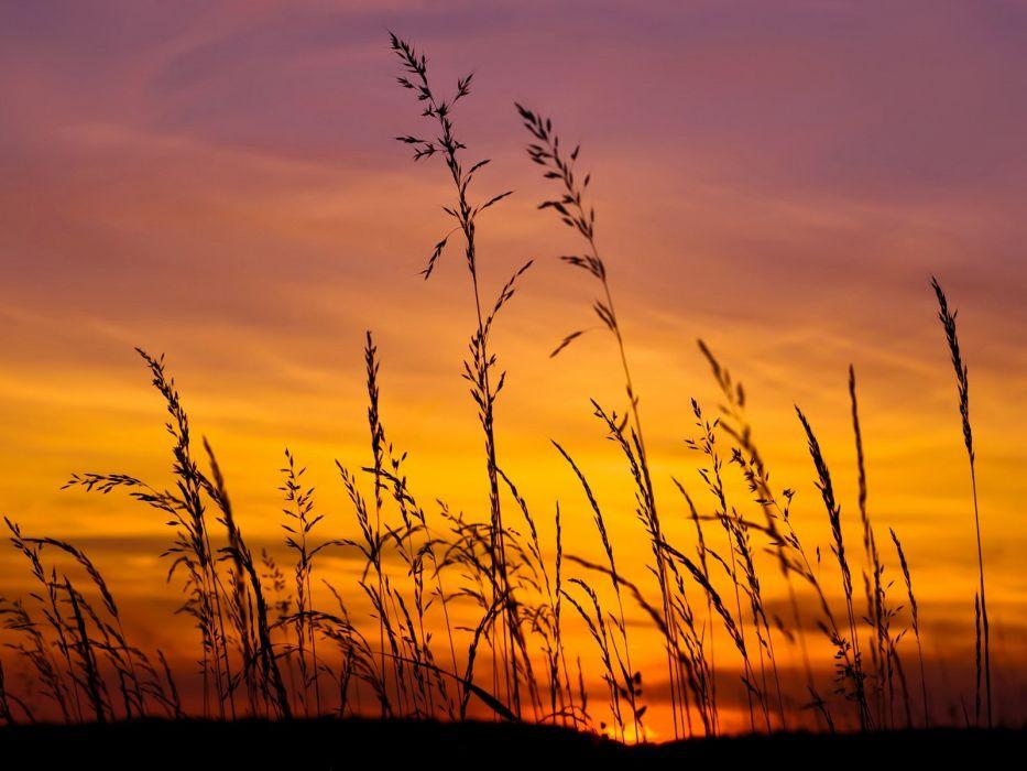 sunset sky beauty reeds red clouds summer wallpaper