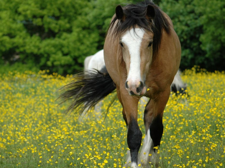 beauty animal horse flower brown beautiful tree cute wallpaper