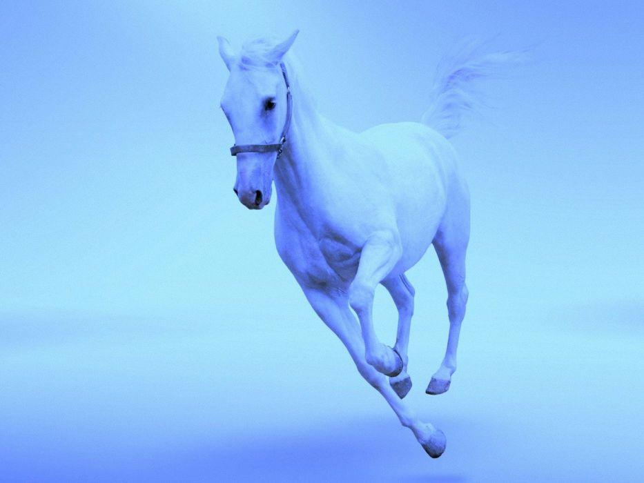 beauty animal horse white beautiful cute wallpaper