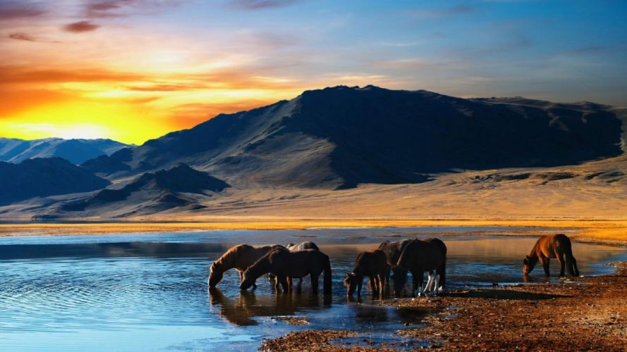 amazing beautiful landscape nature sky clouds sunset animal horse wallpaper