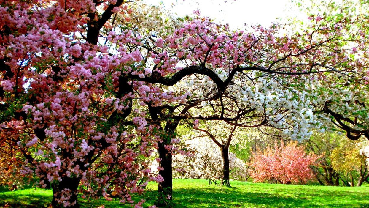 Colors Of Spring tree sunshine garden beauty nature wallpaper