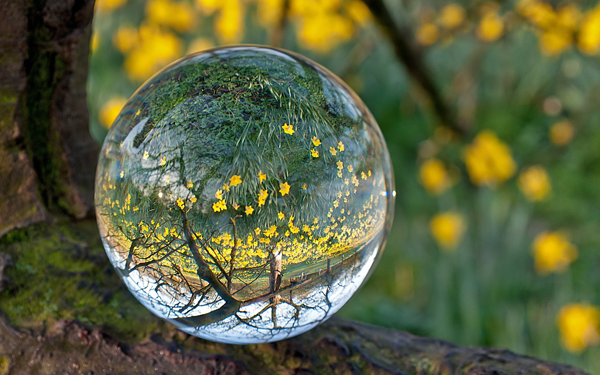 Nature Landscape Beauty Beautiful Forest Tree Water Bubble Wallpaper