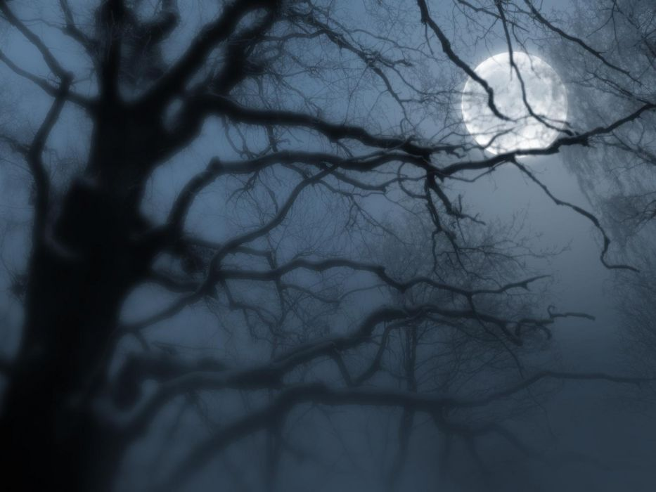 nature landscape beauty beautiful sky moon tree night wallpaper