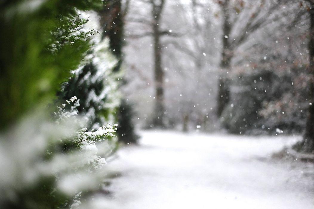 nature landscape beauty beautiful snow winter tree wallpaper
