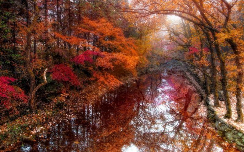 river beautiful autumn forest nature tree beautiful wallpaper
