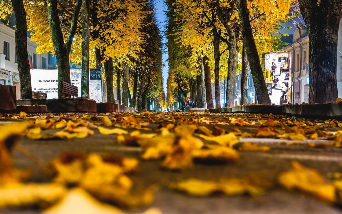 nature landscape beauty beautiful leaves yellow autumn city street wallpaper