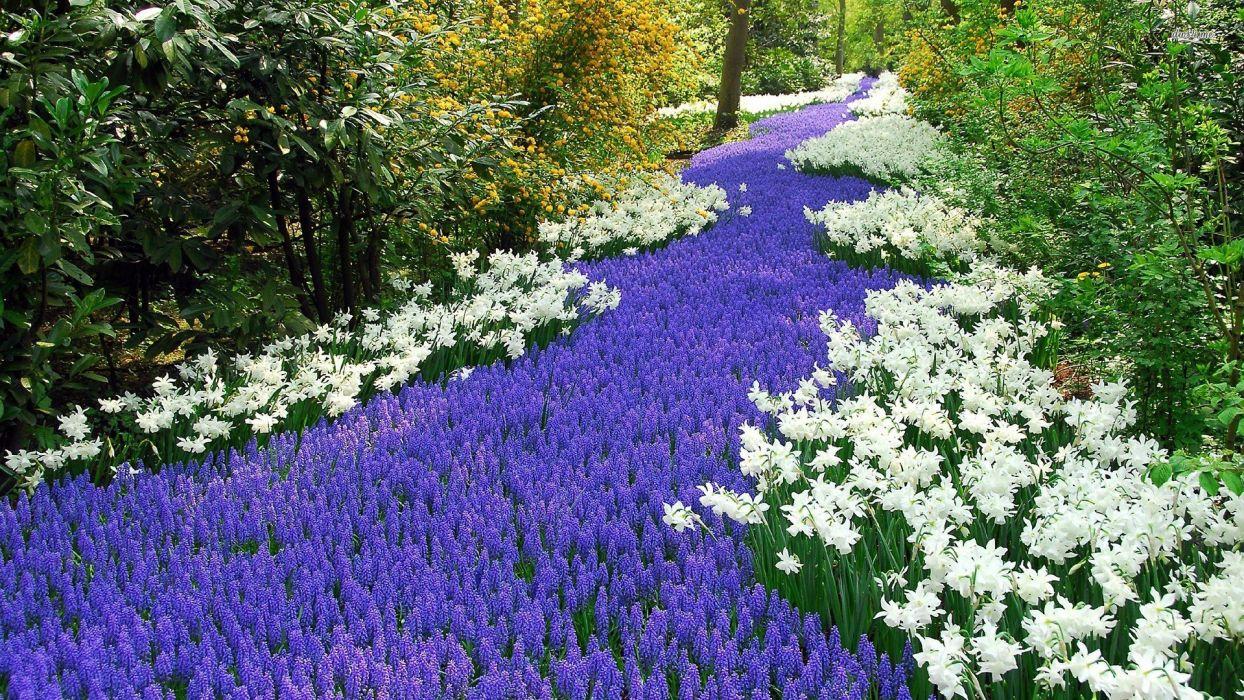 nature landscape beauty beautiful flower colors river wallpaper