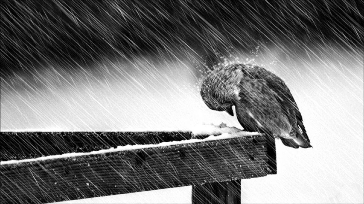 depression sad mood sorrow dark people love winter rain wallpaper