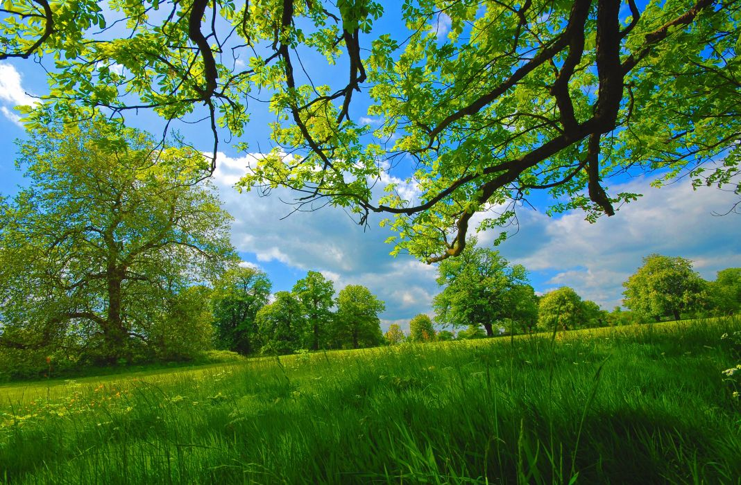 field grass summer trees nature spring wallpaper
