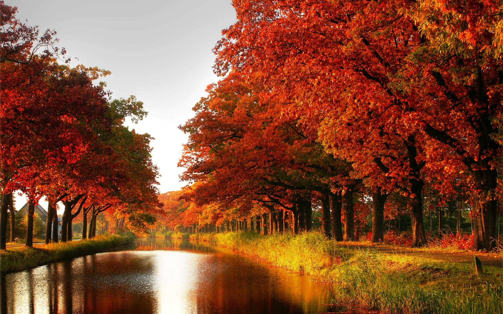 autumn fall tree forest landscape nature leaves wallpaper 1920x1200 812532 wallpaperup