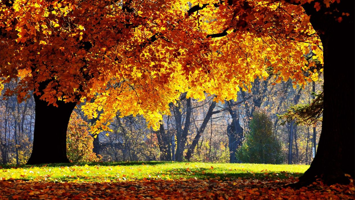 AUTUMN fall tree forest landscape nature leaves wallpaper