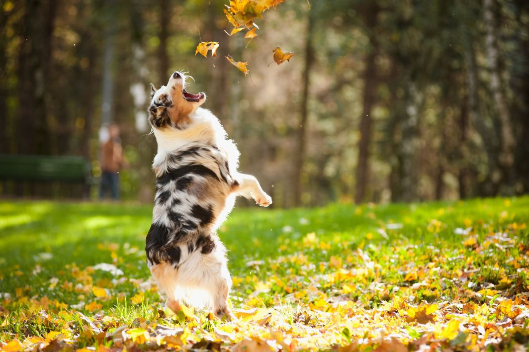 AUTUMN fall tree forest landscape nature leaves dog mood wallpaper