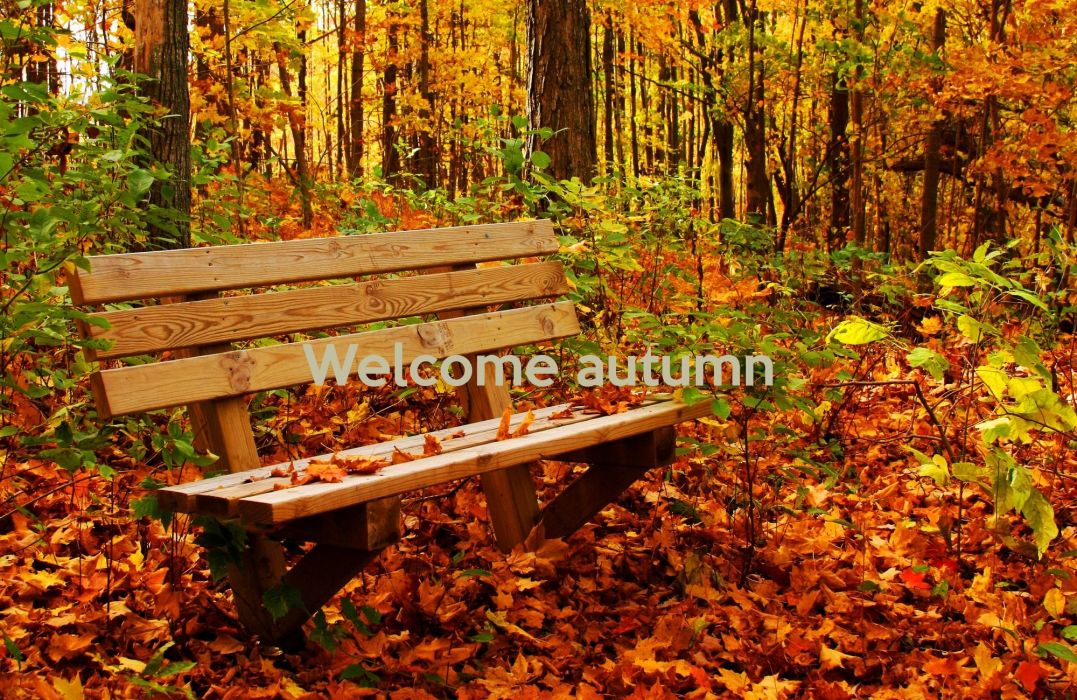 AUTUMN fall tree forest landscape nature leaves bench wallpaper