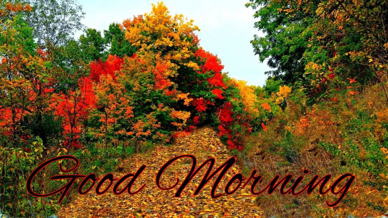 AUTUMN fall tree forest landscape nature leaves good morning wallpaper