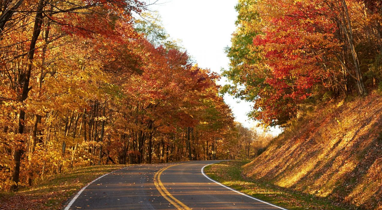 AUTUMN fall landscape nature tree forest wallpaper