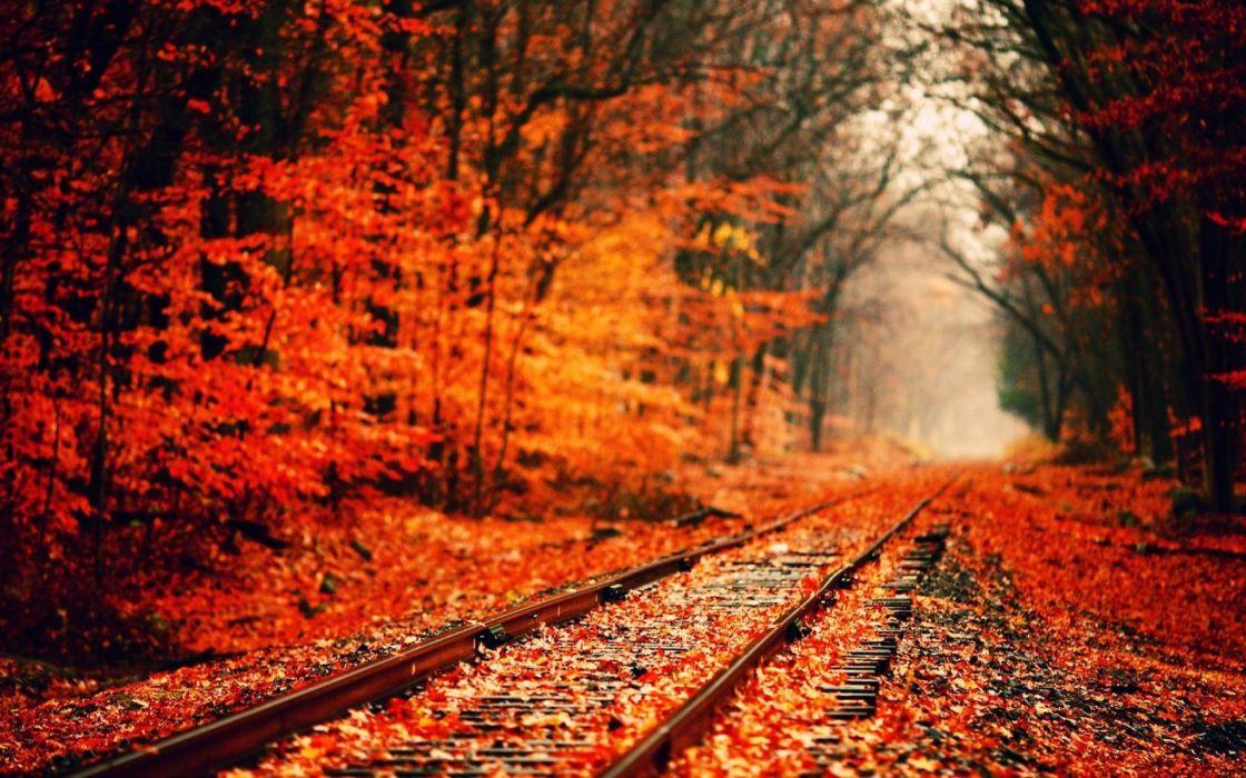 AUTUMN fall landscape nature tree forest railroad tracks train wallpaper