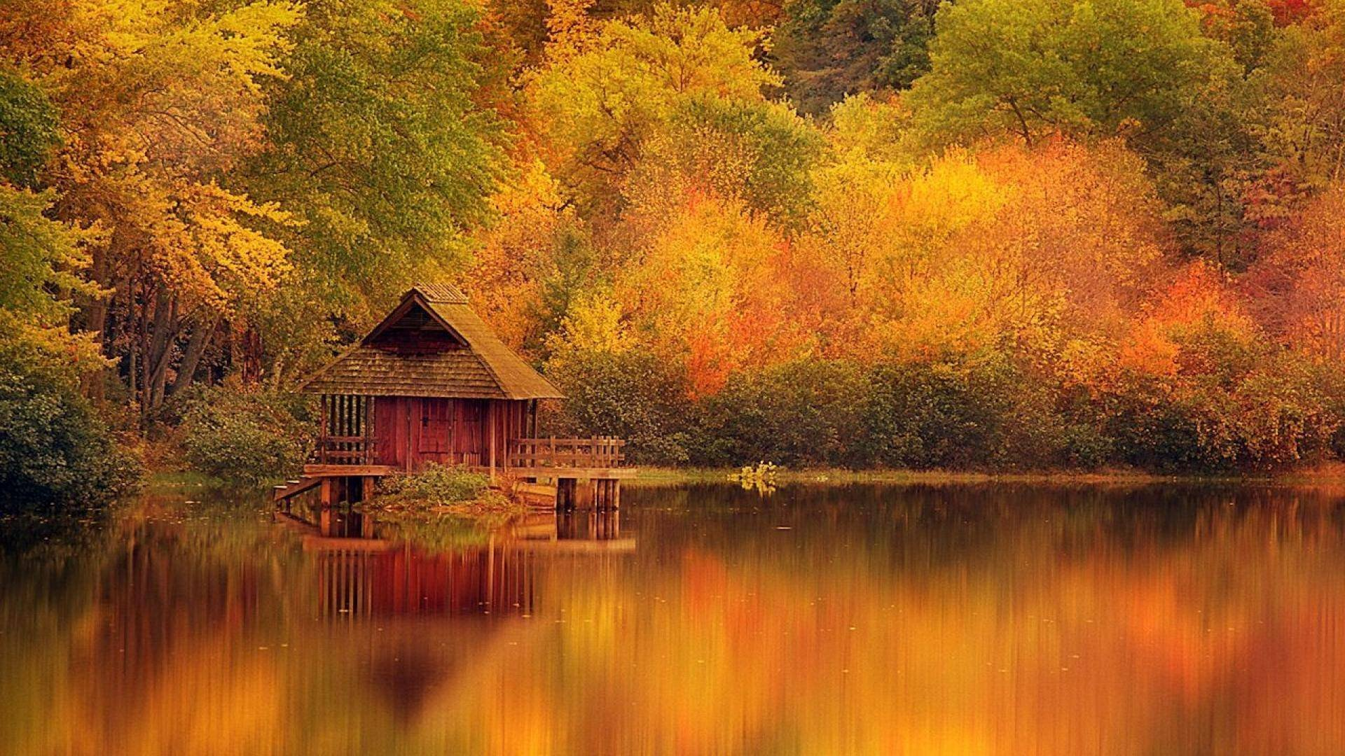 AUTUMN fall landscape nature tree forest wallpaper ...