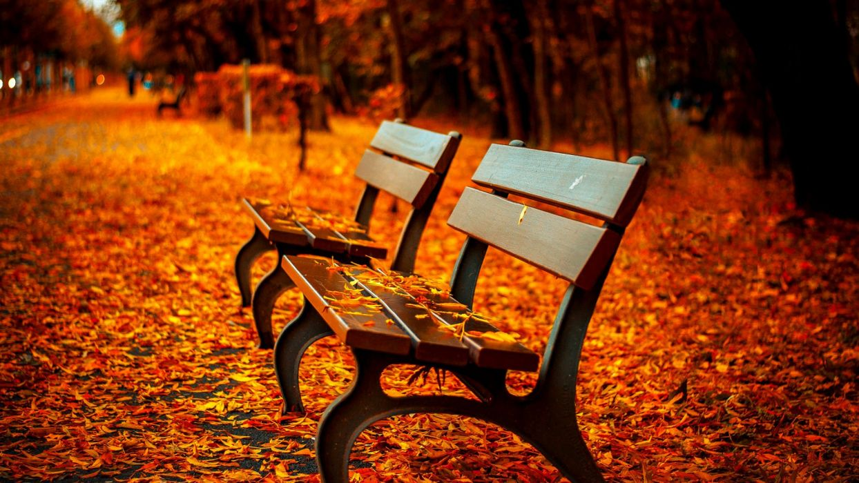 AUTUMN fall landscape nature tree forest bench wallpaper