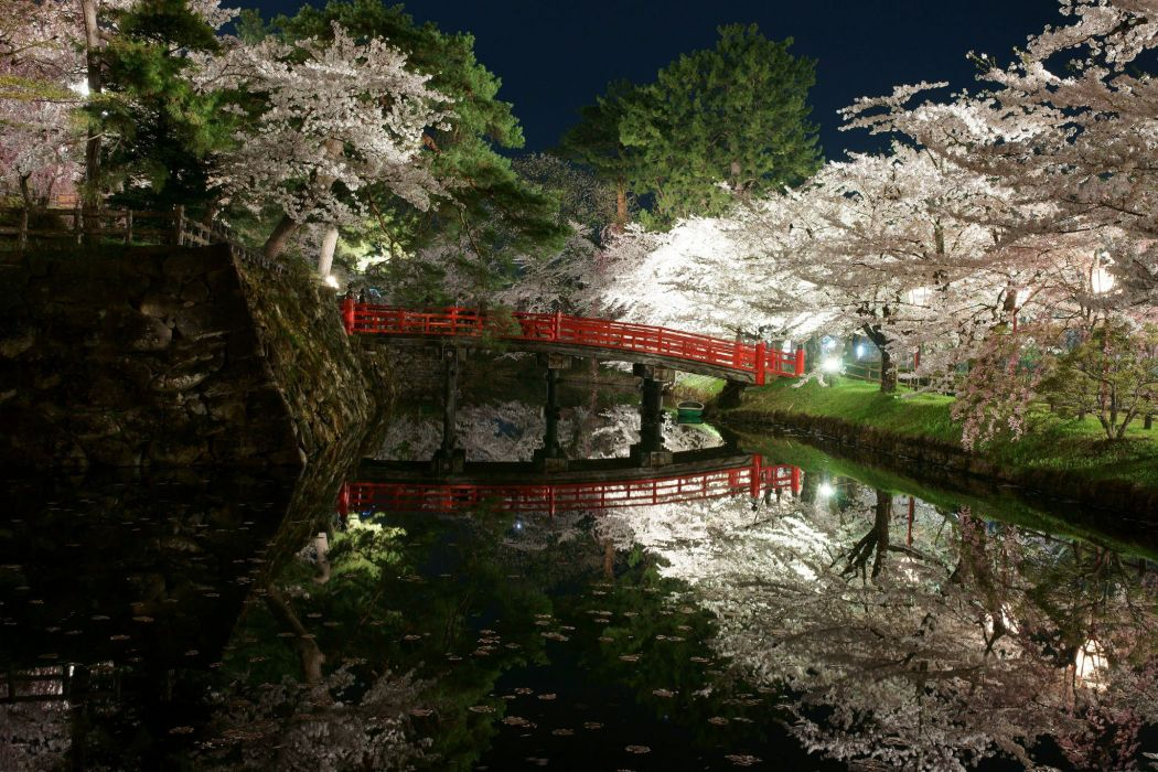 landscape bridge sakura trees beauty beautiful river wallpaper