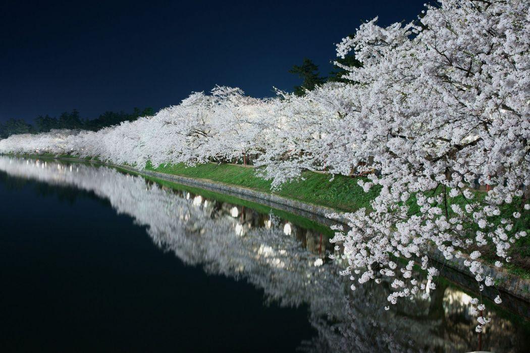 landscape sakura trees beauty beautiful river wallpaper