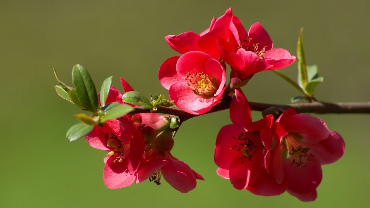 red flower beautiful nature wallpaper