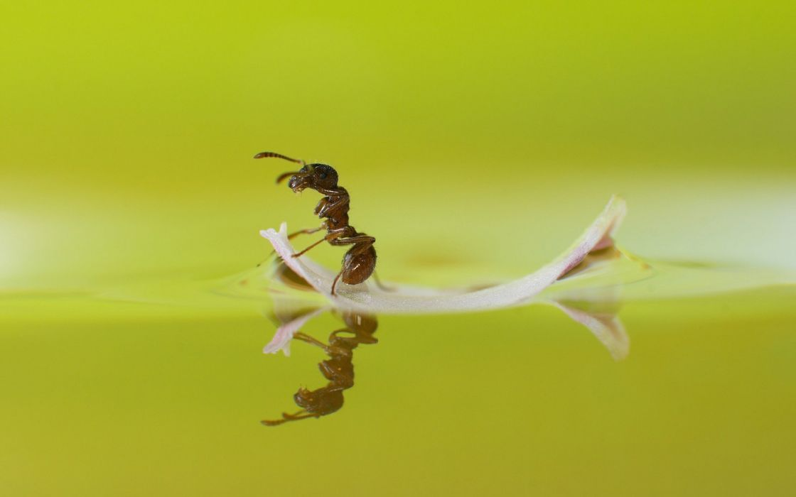 ant water macro wallpaper