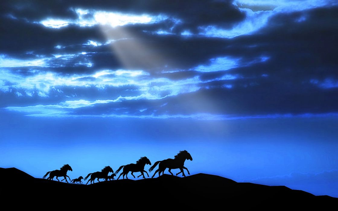 horse sky animal beauty wallpaper