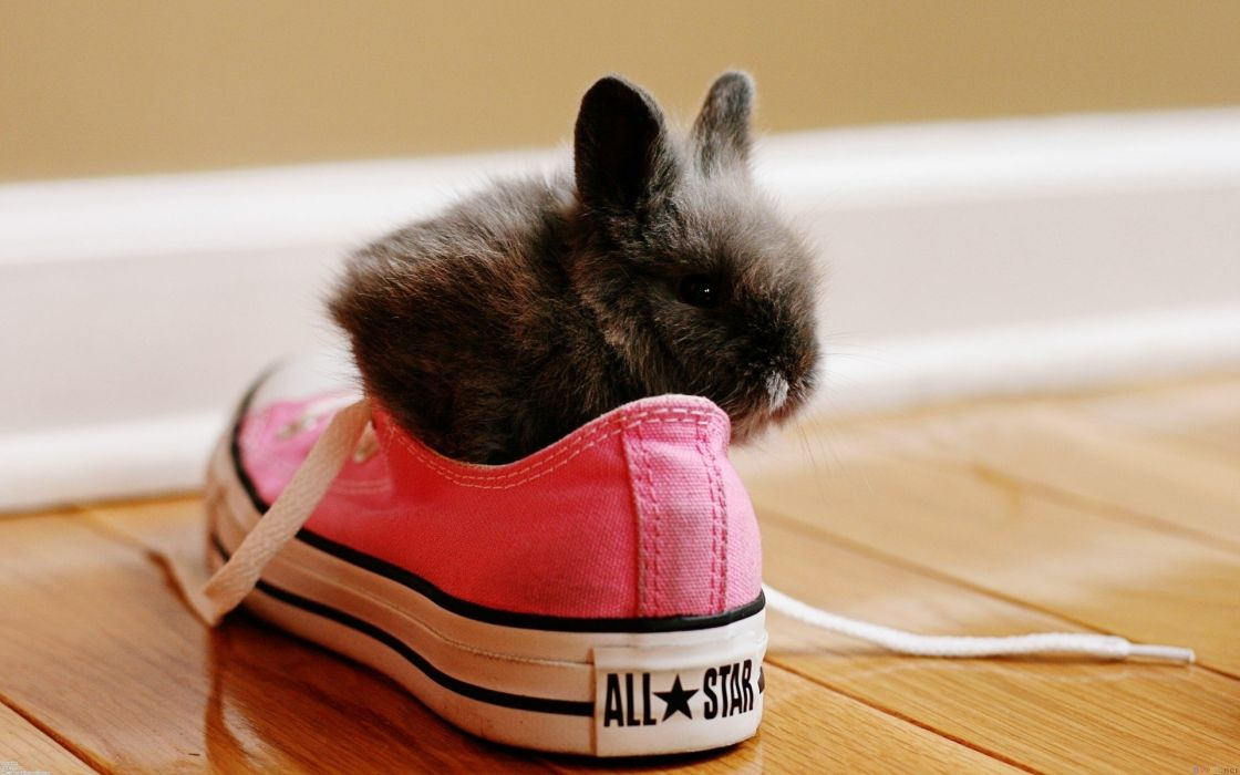 Rabbit in the shoes cute animal wallpaper