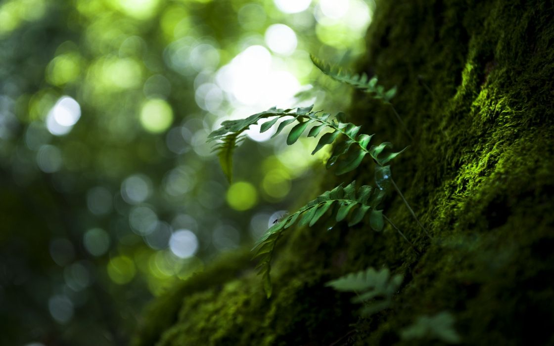 nature forest tree green beauty wallpaper