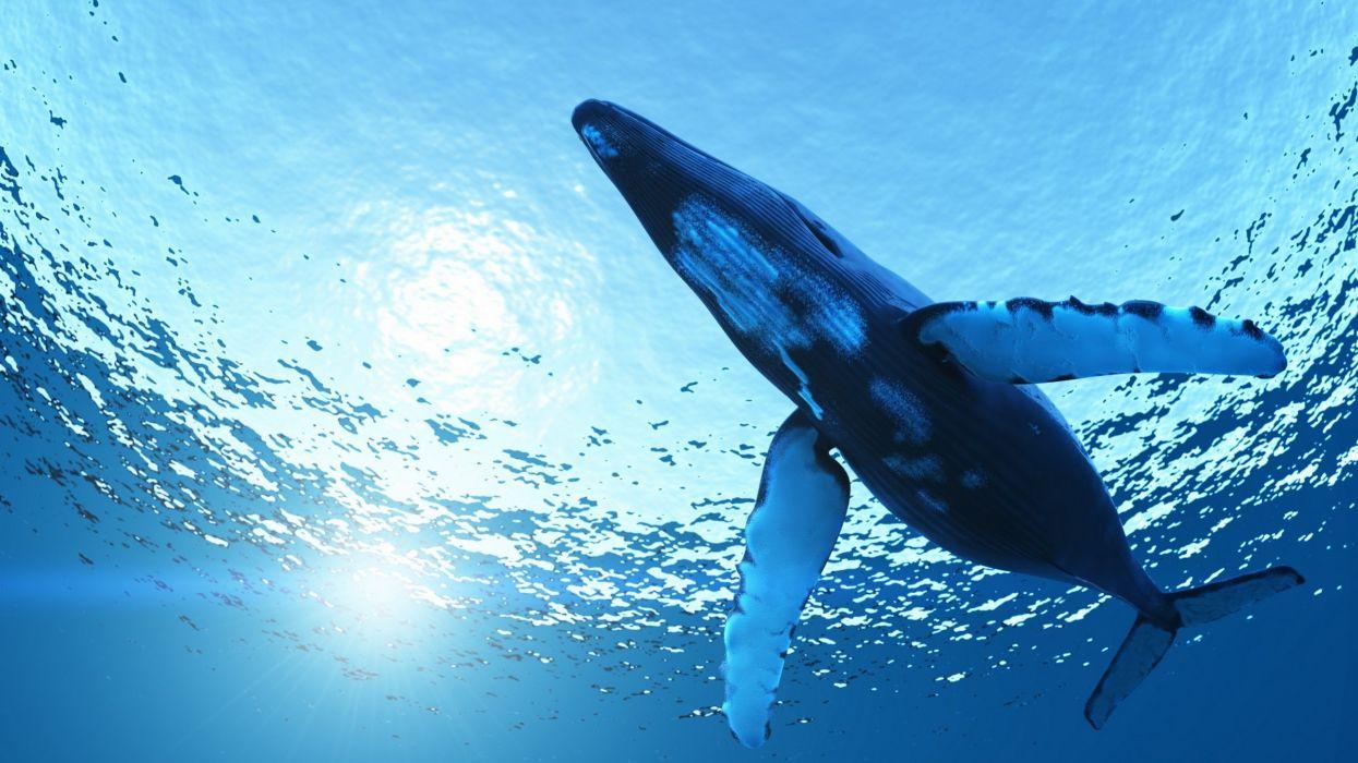 ocean animal blue wallpaper