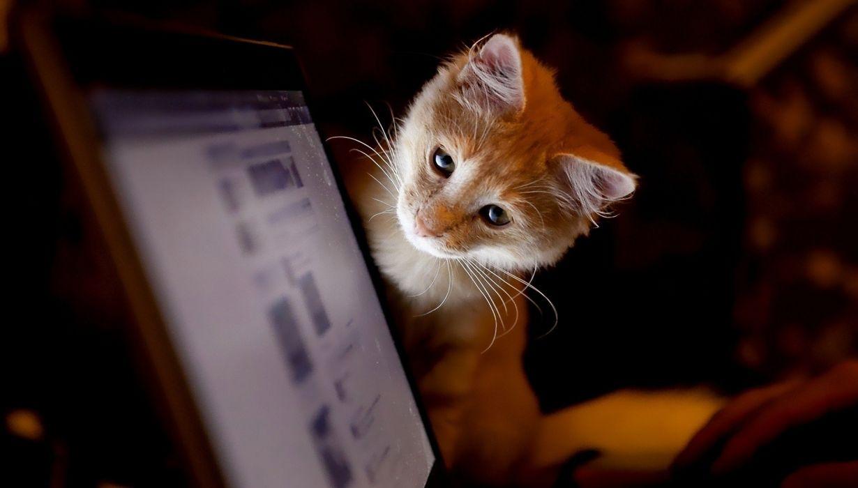 cute animal cat eyes wallpaper
