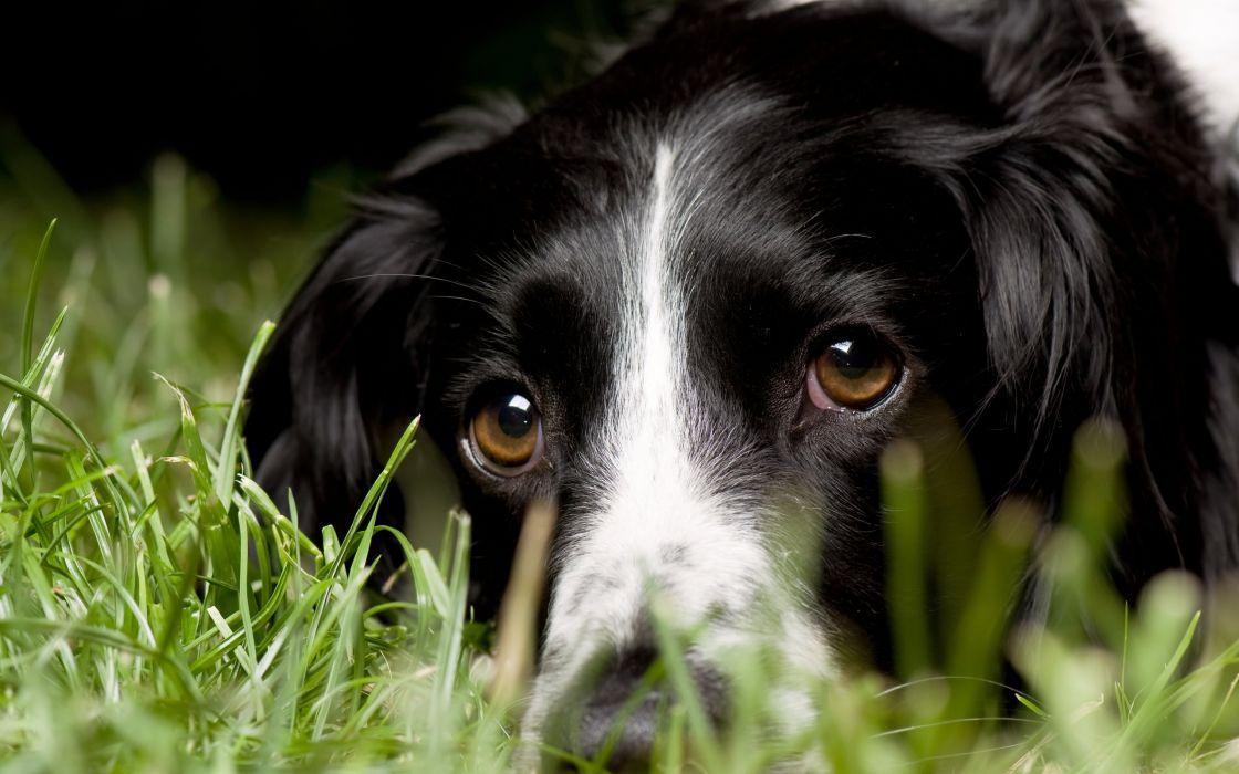 animal cute dog look wallpaper