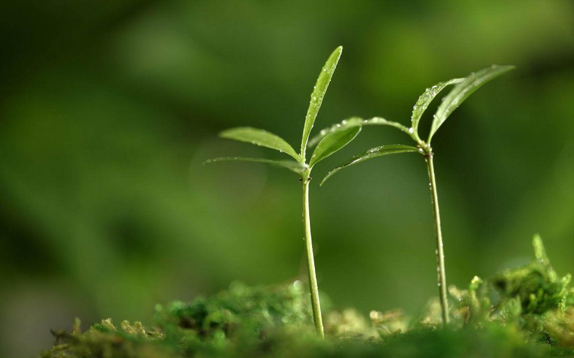 nature beauty green wallpaper