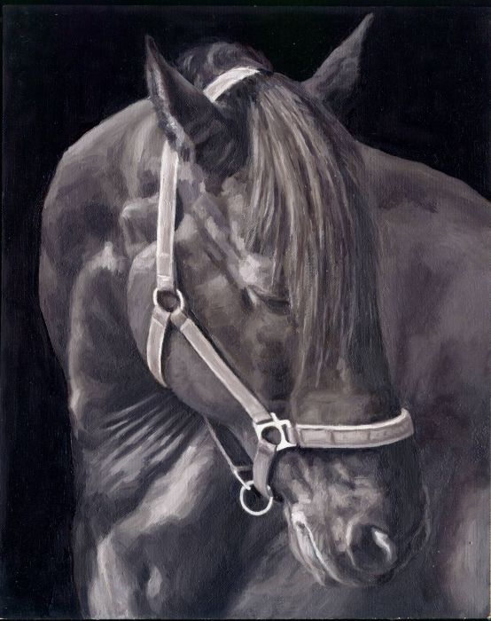 beauty horse Art Artist Monica Brufton Oil Painting 'Sky wallpaper