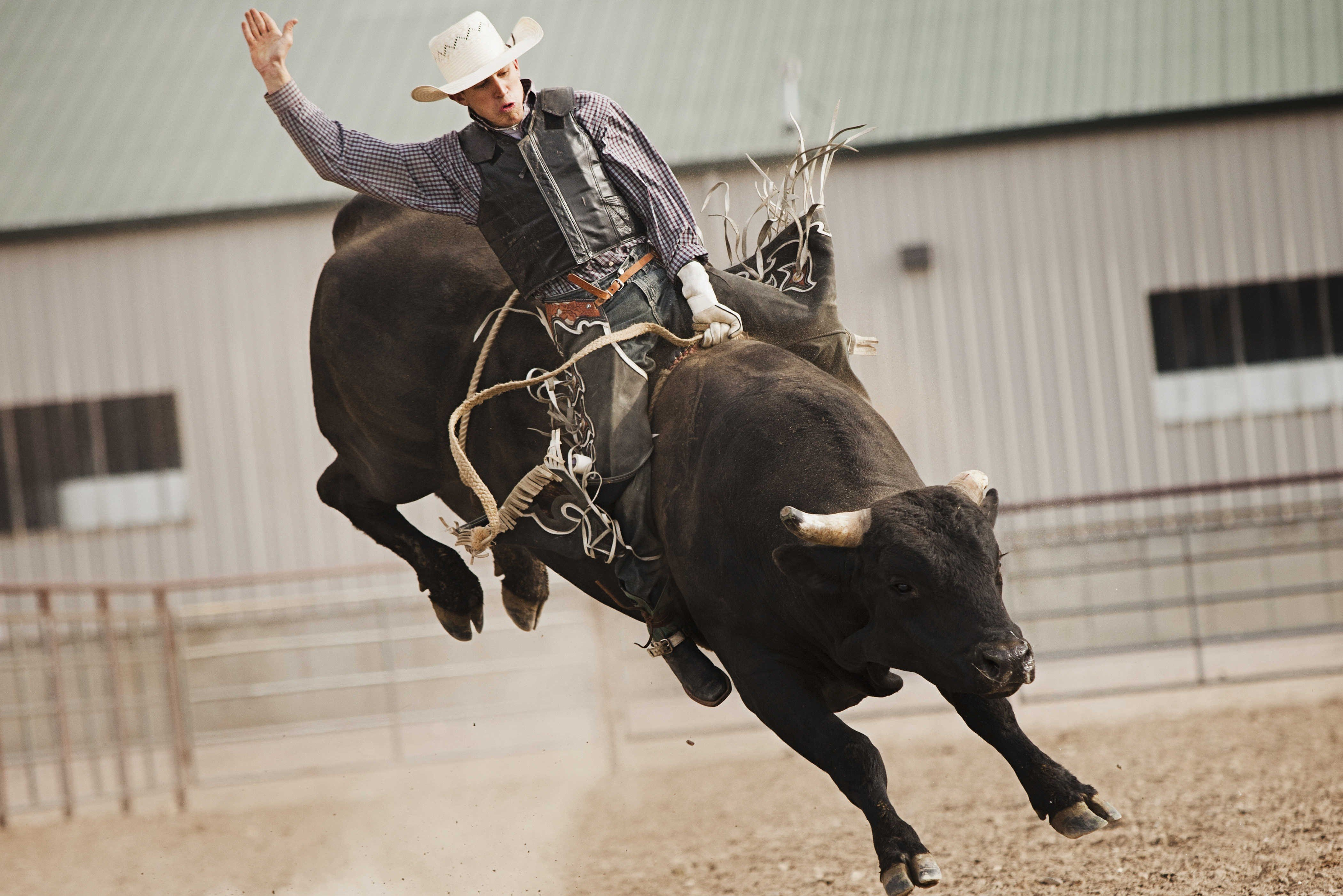 bull riding bullrider cowboy western cow extreme rodeo d