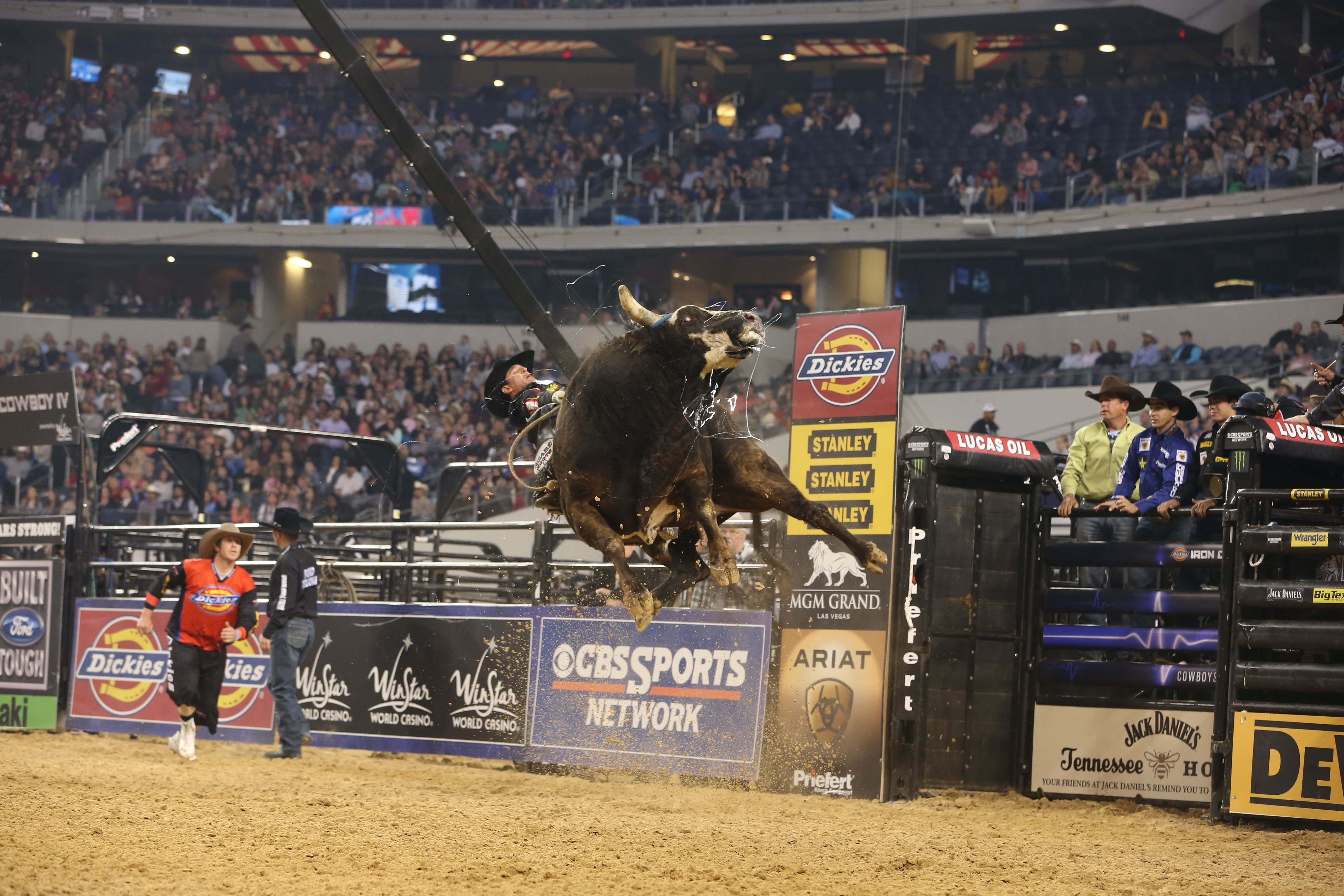 BULL RIDING bullrider cowboy western cow extreme rodeo d ...