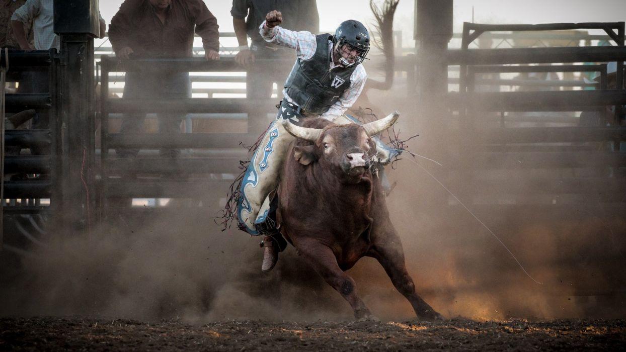 BULL RIDING bullrider cowboy western cow extreme bull rodeo wallpaper