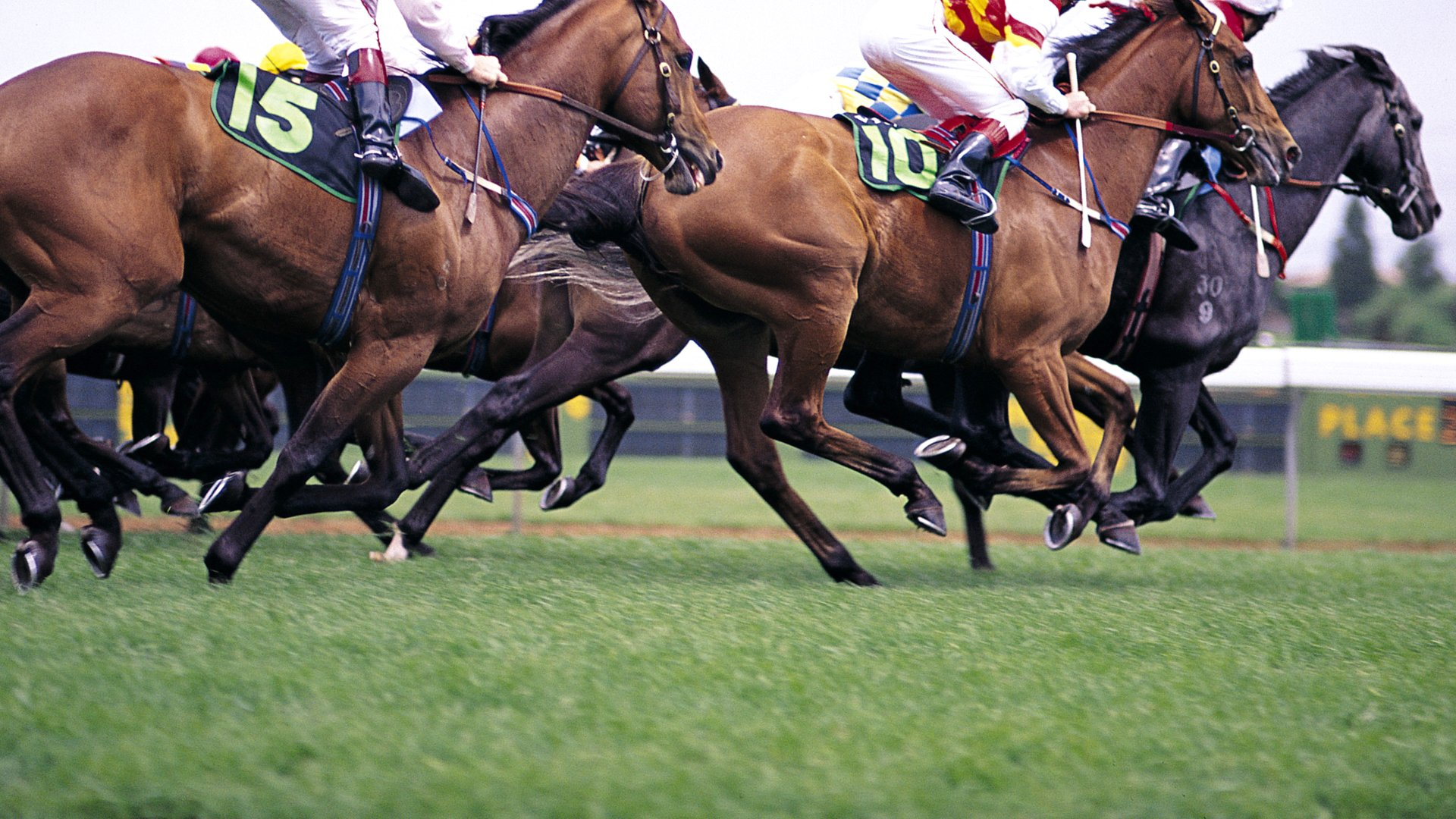 wild horses racing wallpaper - photo #33