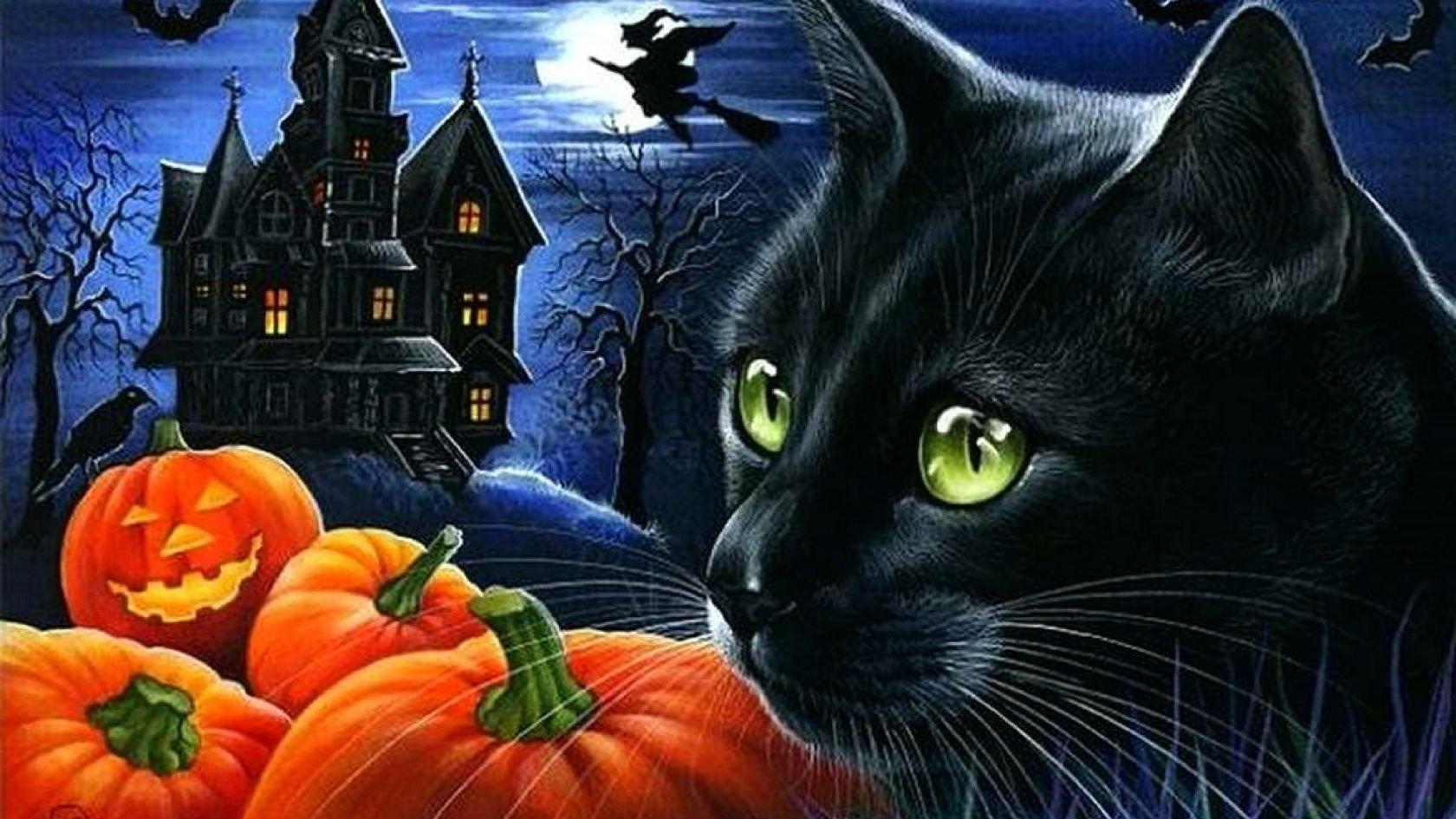 картинки хэллоуина с кошками ненастья закружат нас