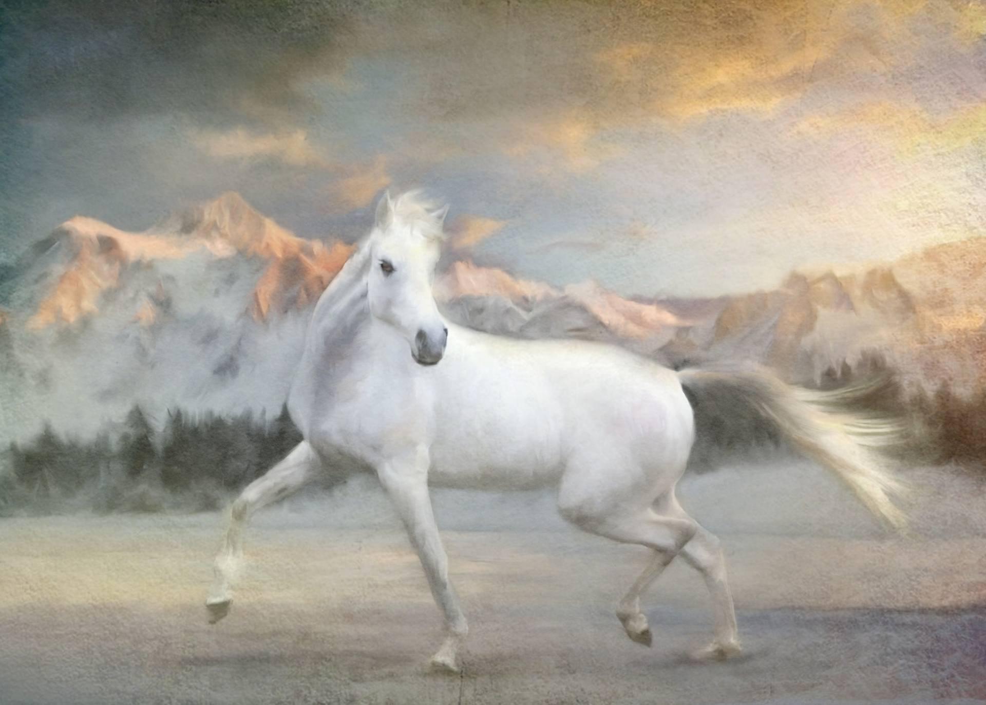 Beautiful white horse paintings - photo#11
