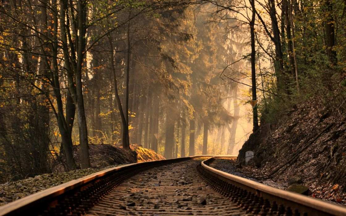 Line in the woods forest tree train road wallpaper